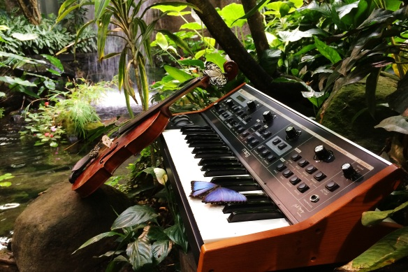 synth and butterflies